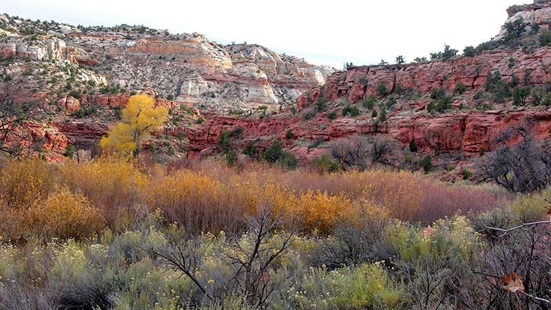 Fall Colors in Southern Utah