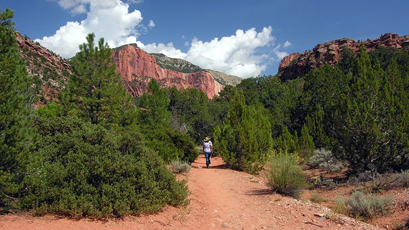 Taylor Creek Hike in Zion
