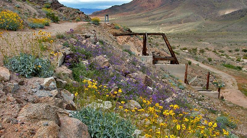 Salt Creek Hills, Death Valley