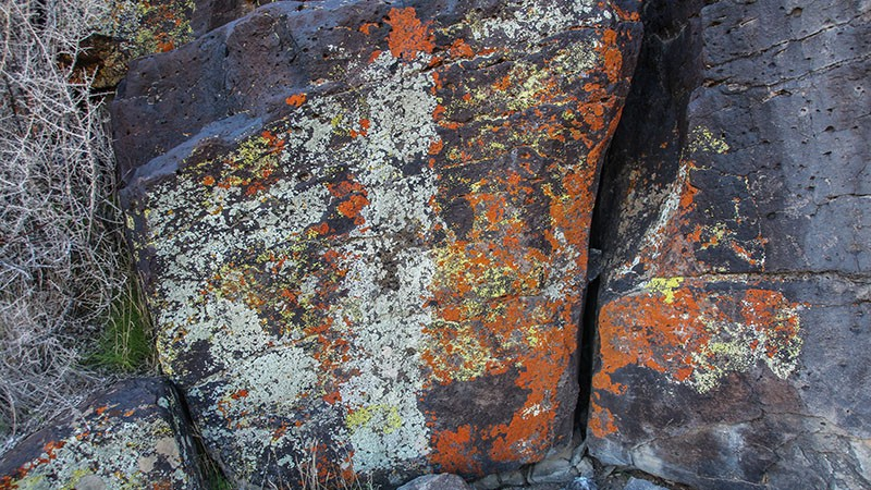 Rock lichens near Inscription Canyon