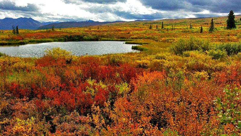 One of many ponds along Denali Hwy