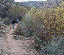 Hiking past the riparian zone in Pipes Canyon