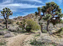Black Rock Area in Joshua Tree