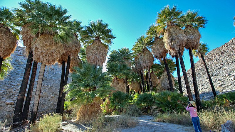 Mountain Palm Springs at Anza-Borrego