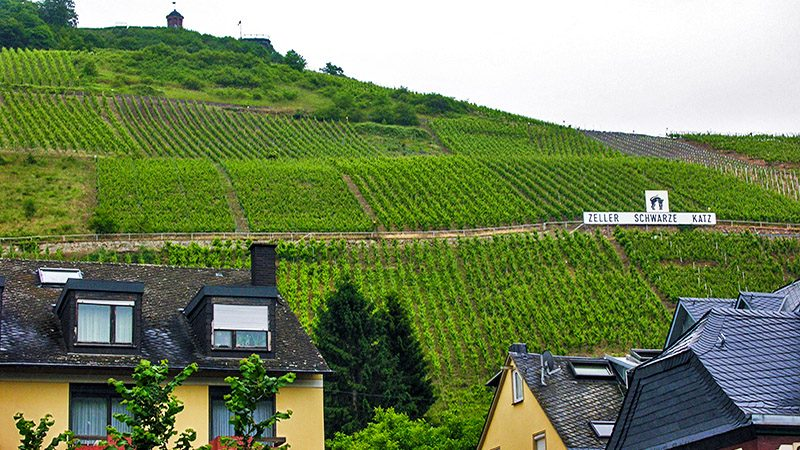 The steep vineyards above Zell